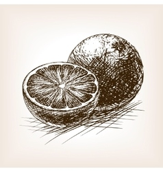 Orange citrus fruit sketch vector
