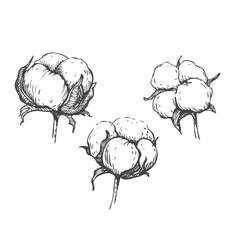 Set of hand draw ink cotton plant vector
