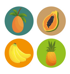pattern tropical fruits icon vector image