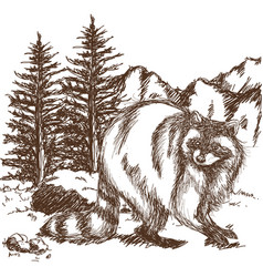 raccoon sketch hand drawing of wildlife vector image vector image