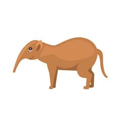 aardvark animal cartoon character isolated on vector image