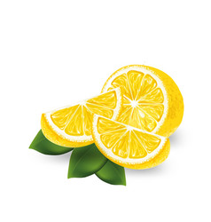 realistic lemon on a white background vector image vector image