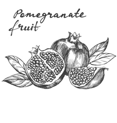 Fruit pomegranate set hand drawn vector