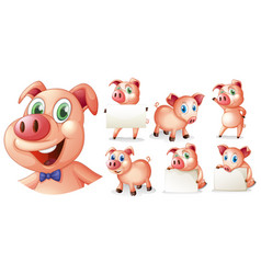 Pigs in different positions vector