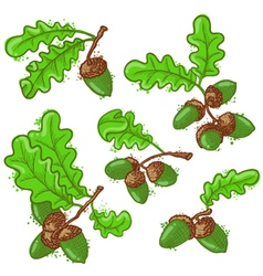 Acorns set vector