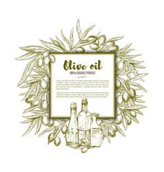 Olive oil sketch poster vector