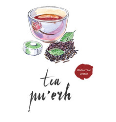 Ripe chinese puerh tea vector