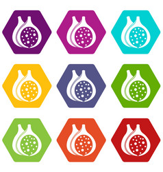 fig fruit icon set color hexahedron vector image vector image