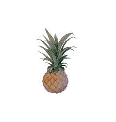 hand painted watercolor pineapple vector image