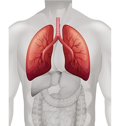 Lung cancer diagram in human vector image vector image