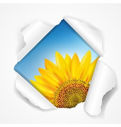 Sky And Sunflower Torn vector image