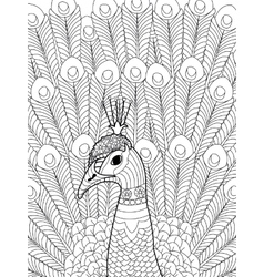 Peacock coloring for adults vector