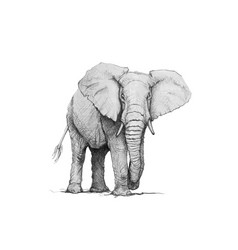 elephant pencil vector image