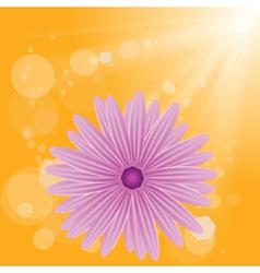 flower on sun background vector image vector image