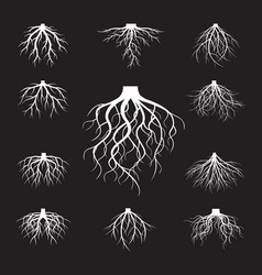 set of white roots vector image vector image