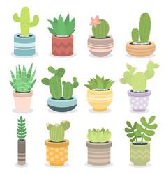 cactus nature green succulent tropical plant vector image
