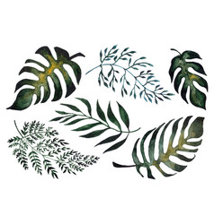 Isolated of fern leaves vector