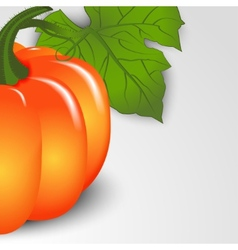 Pumpkins backdrop vector