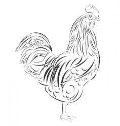 sketch of the cock vector