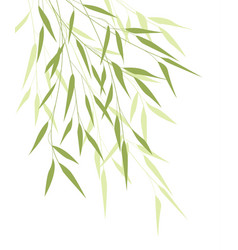 Bamboo green leaves vector