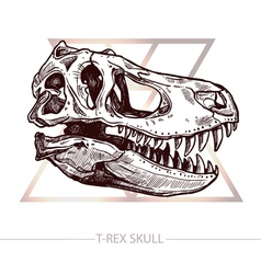 Dinosaur skull drawing of t rex skull vector