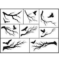 Set of branches and birds vector