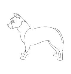 American pitt bull terrier vector