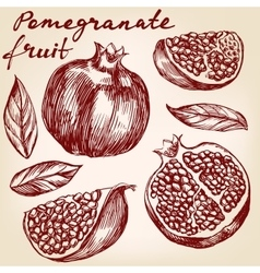 Fruit pomegranate set hand drawn vector