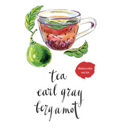 Cup of earl grey tea with bergamot kaffir lime vector