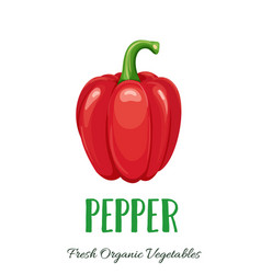 pepper vegetable vector image