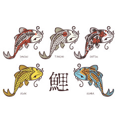 Koi carp breeds classification with japanese vector