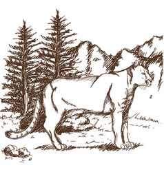 Hand drawn cougar or mountain lion landscape vector
