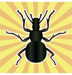 Insect anatomy sticker ground beetle bug vector