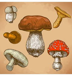 engraving mushrooms retro vector image