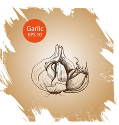 Background sketch garlic vector