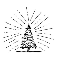 Pine tree drawing in doodle style vector