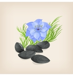 Nigella or black cumin with flowers and leaves vector