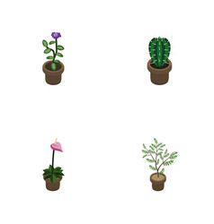 Isometric flower set of peyote grower fern and vector