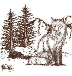 Wolf wildlife animal image is hand drawn pencil vector
