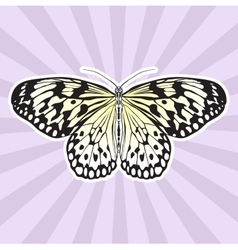 Insect anatomy sticker butterfly idea leuconoe vector