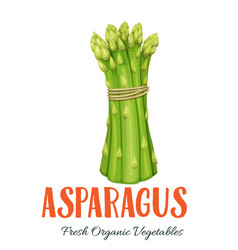 asparagus vegetable vector image