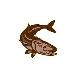 Cobia fish diving down retro vector