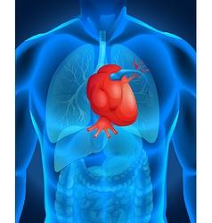 Heart disease diagram in human vector image vector image