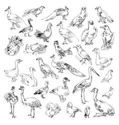 Wild birds zoo set hand-drawn vector