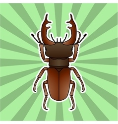 Insect anatomy sticker stag-beetle lucanus vector