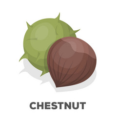 chestnutdifferent kinds of nuts single icon in vector image