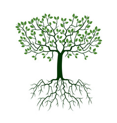 Green tree with roots vector