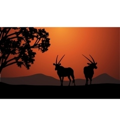 Silhouette of two antelope vector
