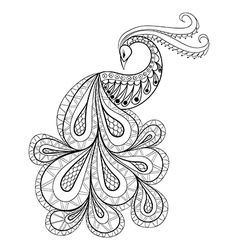 Hand drawn peacock for antistress coloring page vector