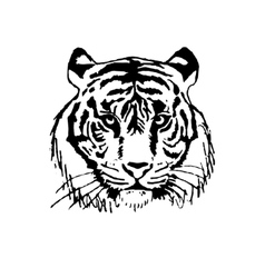 -the face of a tiger vector